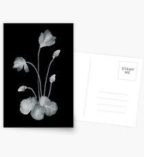 Ink flower negative Postcards