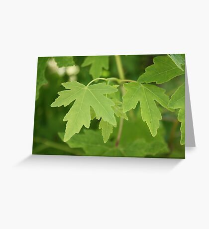 Amber Orientalis Leaves Greeting Card