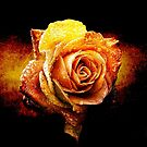 Art of the Rose by Janice O'Connor