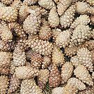 pine cones by VallaV