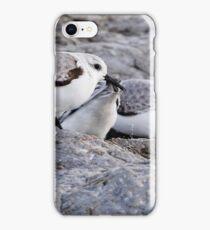 Sanderling iPhone Case/Skin
