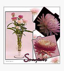 Photo Collage Of Strawflowers Photographic Print
