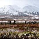 Denali - Winter Came Early 2 by mcstory