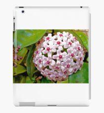 Hoya Carnosa iPad Case/Skin