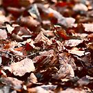 Forest floor in fall by Essexbeginner