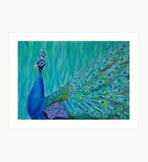 Peacock glance Art Print