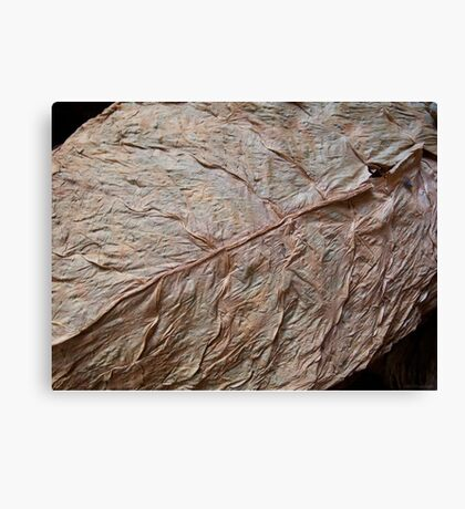 Detail, Tobacco Leaf Canvas Print