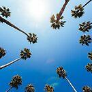 Palm Trees in California by Giorgio Fochesato