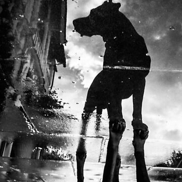 My #dog filby reflected in a puddle today taken on my #galaxynexus by heatherbuckley