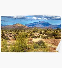Sonoran Desert Poster