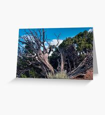 Utah Juniper Tree at Dinosaur National Monument Colorado Greeting Card