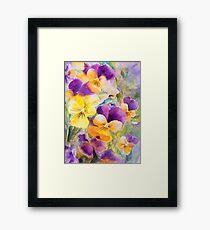 Violas Framed Print