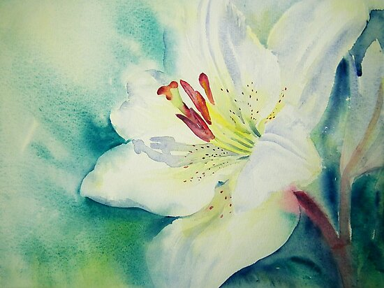 Lily White by Ruth S Harris