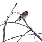 winter robin by marxbrothers
