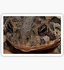 Southern Toad - Anaxyrus Terrestris Sticker