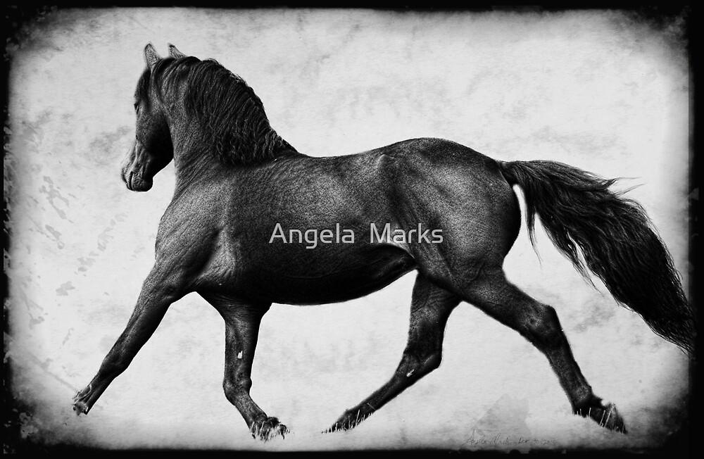 Lippitt Morgan Stallion Trotting by Angela  Marks
