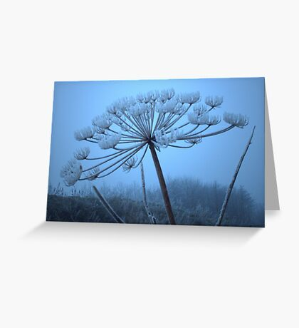On a cold New Years Day Greeting Card