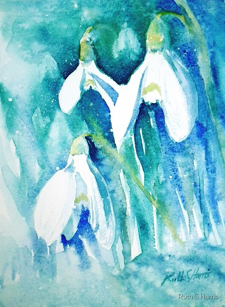 Snowdrops by Ruth S Harris