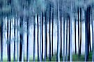 Tall Trees by Laurie Minor