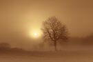 Misty Tree II by James Coard