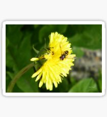 Dandelion Visitor Sticker