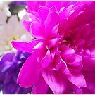 Pinktastic Pink by MortemVetus