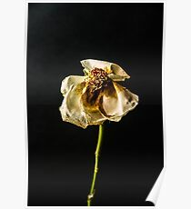Decayed Flower Poster