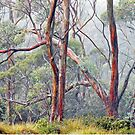 Gums in the Mist by Harry Oldmeadow