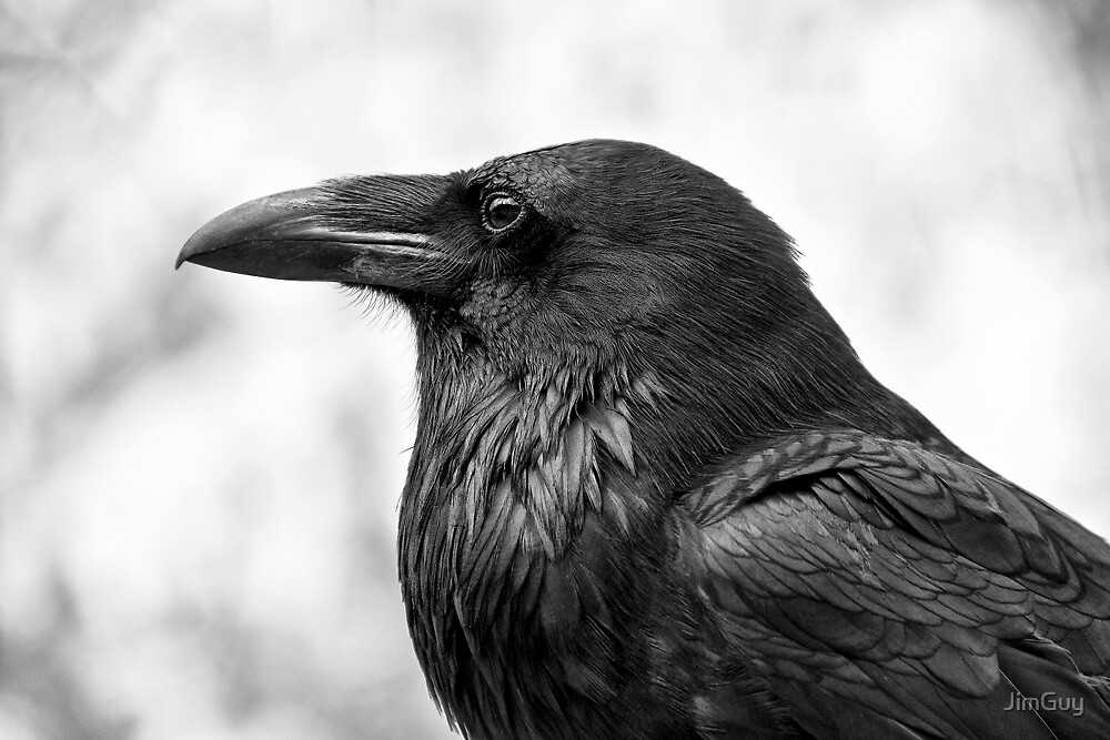 The Raven by JimGuy