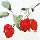 Rose Hips by kest standley