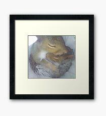 Cuddling Fur-Babies (Squirrels) Framed Print
