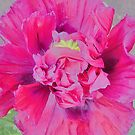 Painting of a Pink Poppy by LoneAngel