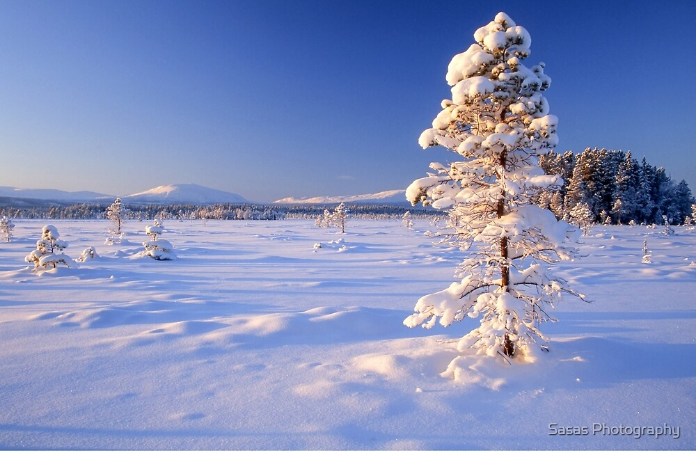 Snow covered trees in north Sweden by IB Photography