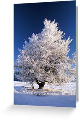 Frozen tree by IB Photography