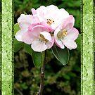 Apple Blossom by KatDoodling