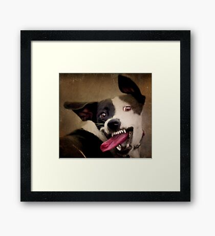WARNING: OBAMA'S COMING FOR YOUR CHEW TOYS Framed Print