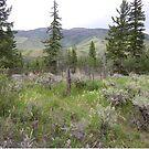 Colorado Burial Site  by clizzio