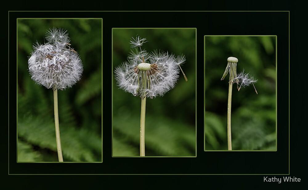 Dandelion by kathleenjean