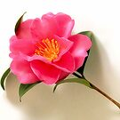 Camelia by SuddenJim
