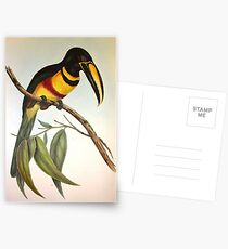 John GouldÆs Monograph of the Ramphastidae, or Family of Toucans, published in  Postcards