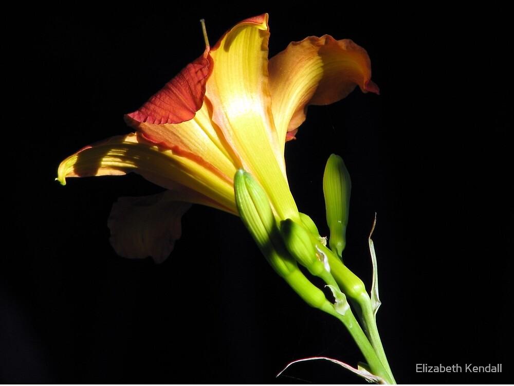 A daylily / 'n Daglelie uit my tuin by Elizabeth Kendall