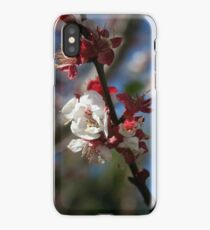 Sunlight Embracing Apricot Blossom iPhone Case