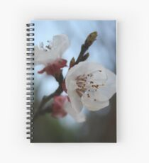 Close Up Apricot Blossom In Pastel Shades Spiral Notebook