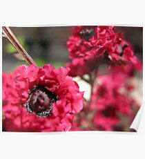 Pink Tree Flowers – Macro Close-Up Poster