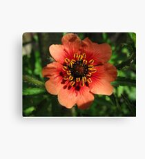 Orange Flower – Macro Close-Up Canvas Print