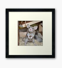 Ivy the mouse  Framed Print