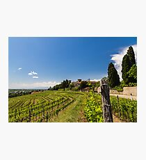 grapevine field in the italian countryside Photographic Print