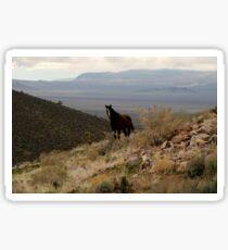 Wild Horse Sticker