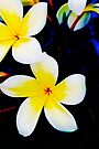 Frangipani Abstract by Larry Costales