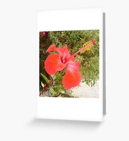 Beautiful Red Hibiscus Flower With Garden Background Greeting Card